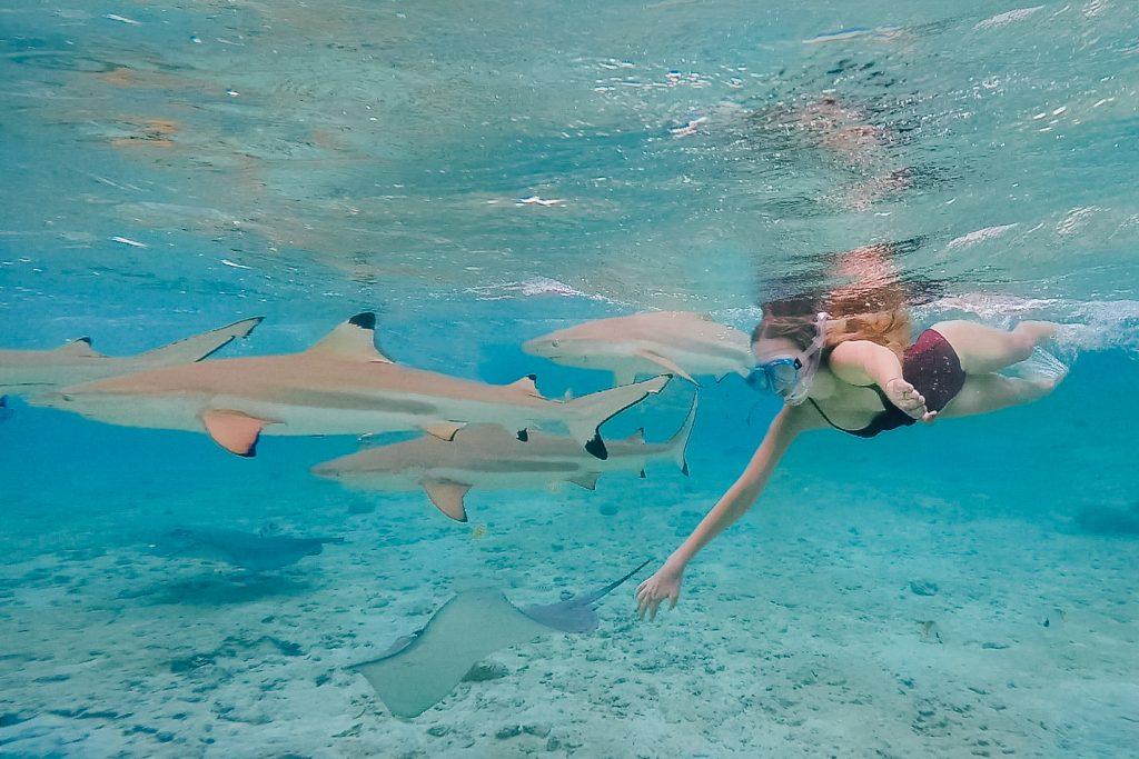 Holiday in Tahiti- Snorkelling with Sharks & Stingrays in Bora Bora