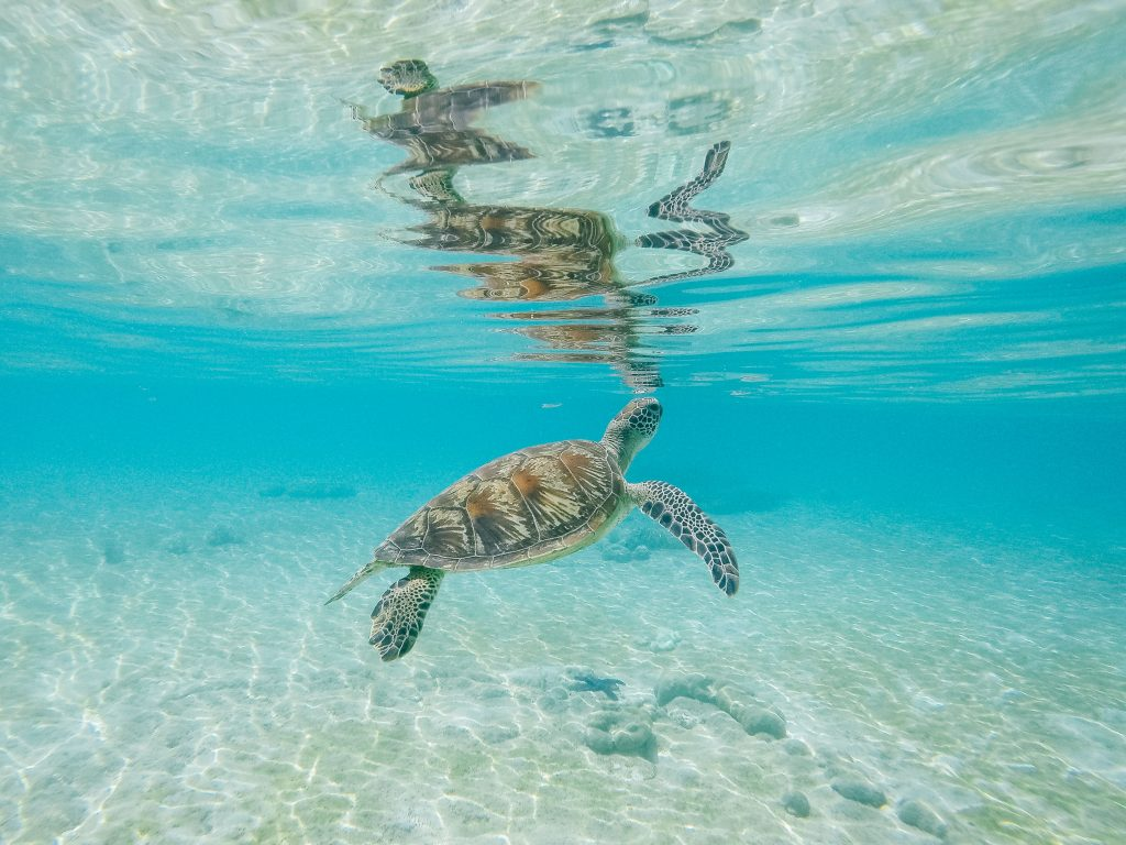 10 things to do in tropical north queensland exploring the